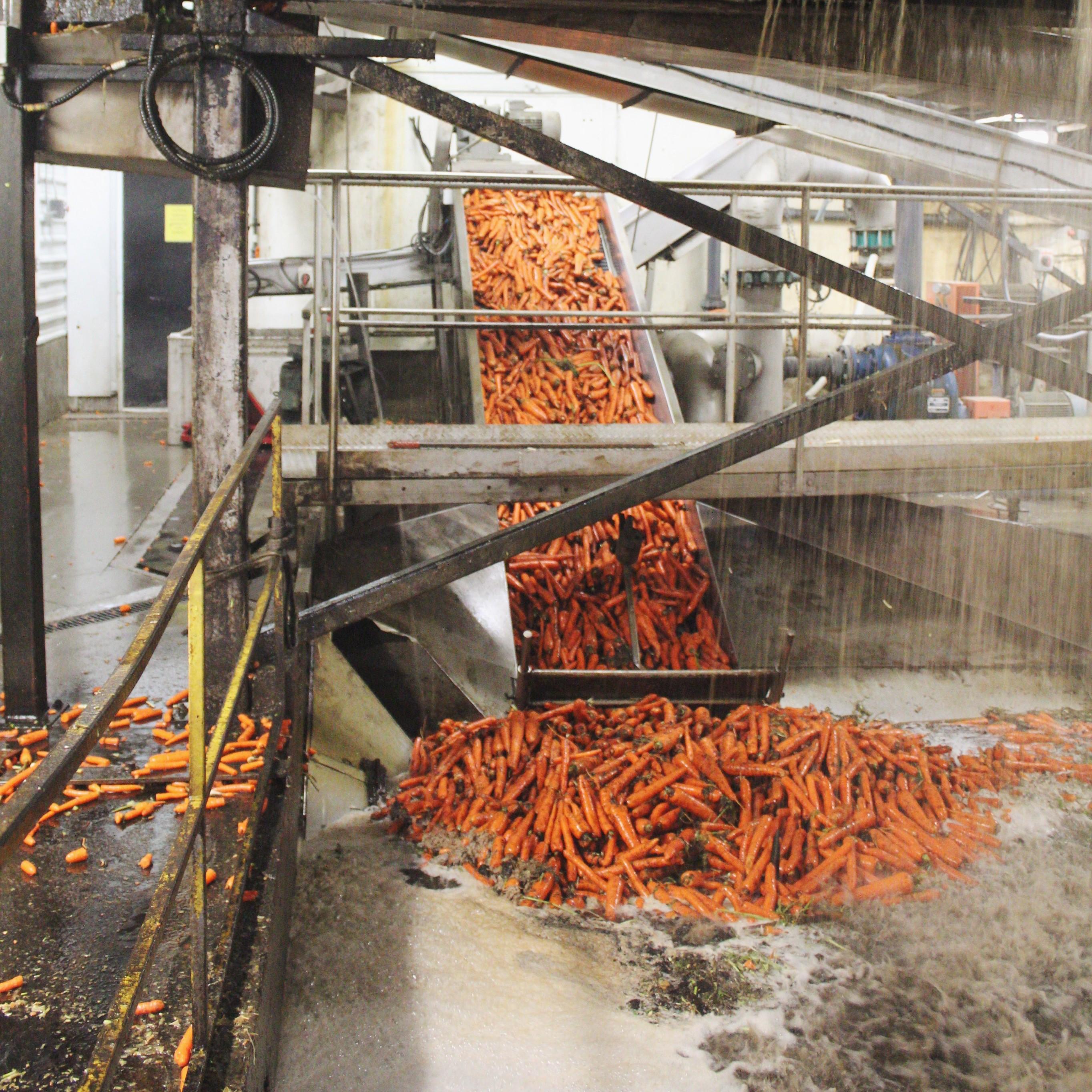 carrot storage 3